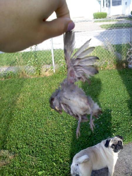 Bird & Louise